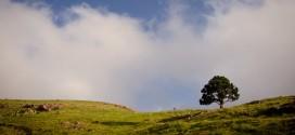 افتتاح چند باره مجتمع گردشگری پلمیس اسفراین